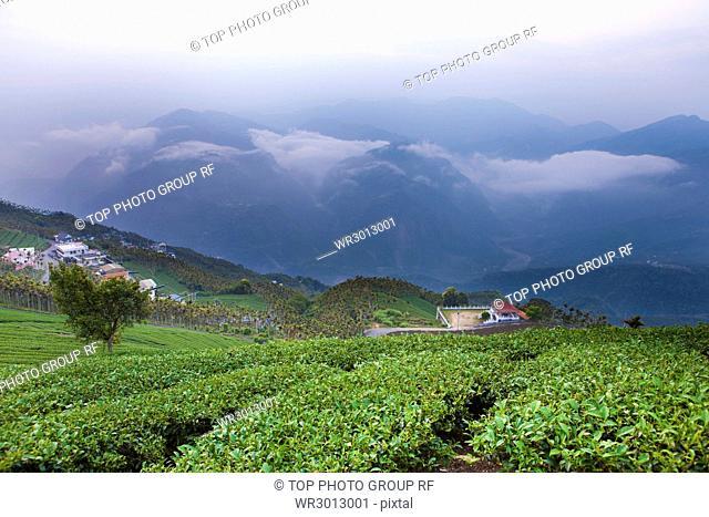 Jiayi;green lake;tea garden