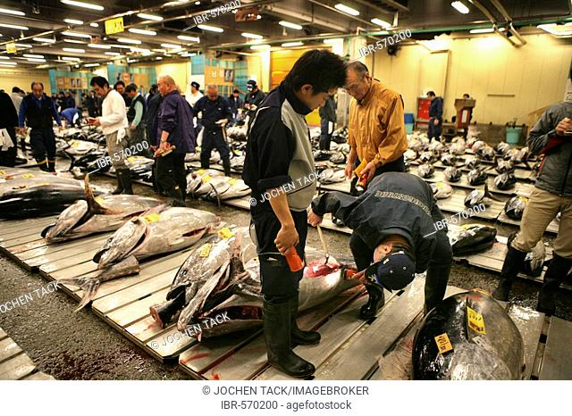 World largest fish wohlesale market Tsukiji Auction of fresh and frozen tuna fish Tokyo Japan