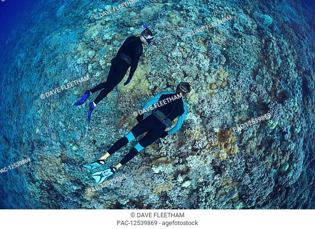 Two men free diving over a Hawaiian hard coral reef; Hawaii, United States of America