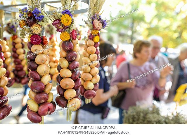 12 October 2018, Thuringia, Weimar: 12 October 2018, Germany, Weimar: Onion plaits hang at a market stall during the 365th Weimar onion market