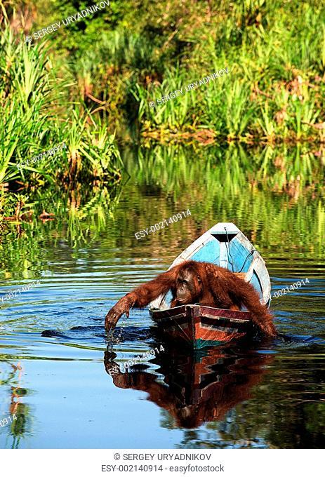 Borneo the pirate