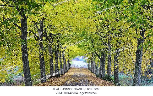 Avenue in Sweden