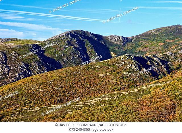 Hayedo de la Pedrosa. Sierra Norte. Riofrio de Riaza. Segovia Province. Castilla y Leon. Spain