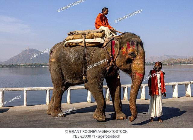 Men With Elephant, Fateh Sagar Lake, Udaipur, Rajasthan, India