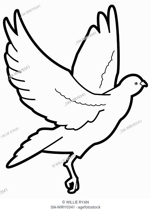 Flying bird on white background