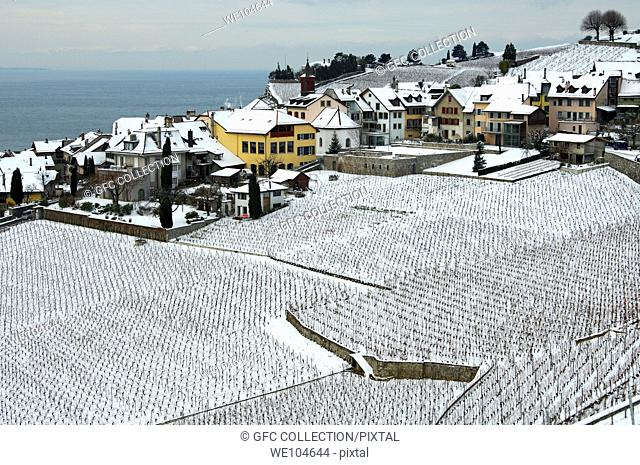 The municipality of Rivaz between snow-covered vineyards and Lac Leman, Lake Geneva, in the UNESCO World Heritage site Lavaux at a cold winter day
