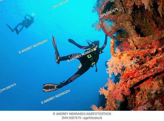 """Diver looking at shipwreck """"""""Giannis D"""""""". Red sea, Egypt, Africa."""