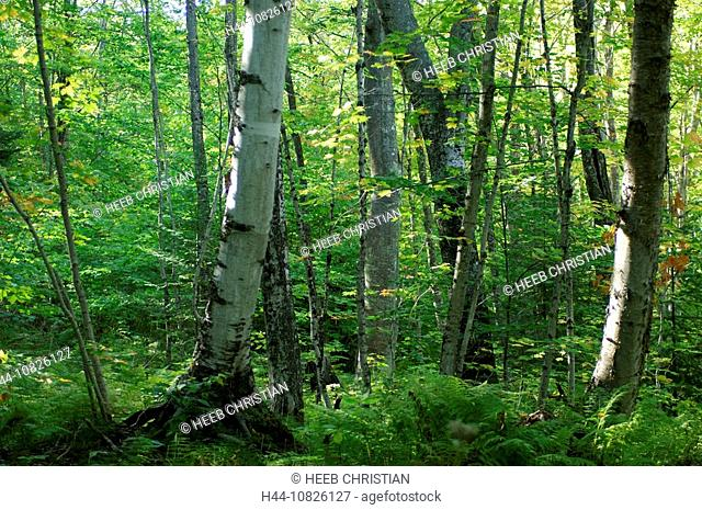 scenery, landscape, wood, forest, inside, forest inside, trees, deciduous forest, fern, forest ground, trunks tribes