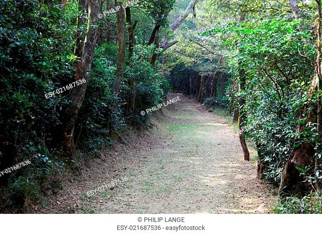 Trail in the forest of Lantau Island, Hong Kong