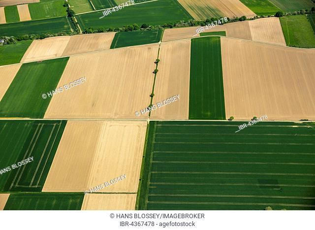 Aerial view, fields, cornfields, Neuss, Lower Rhine, North Rhine-Westphalia, Germany