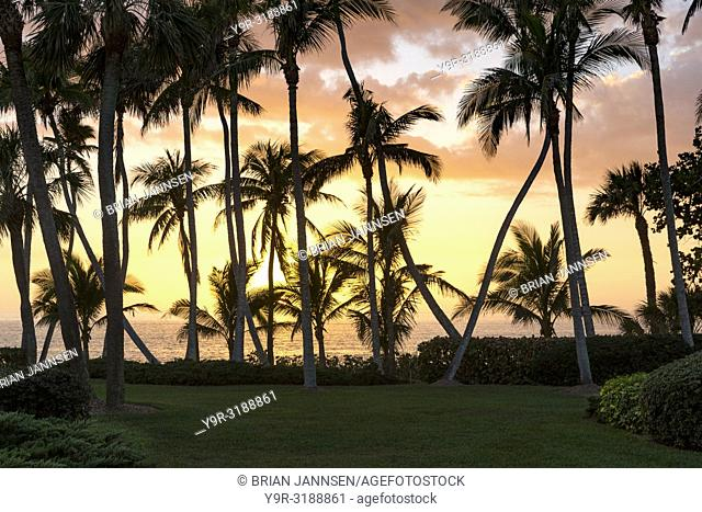 Palm Trees and sunset over Gulf of Mexico in Naples, Florida, USA