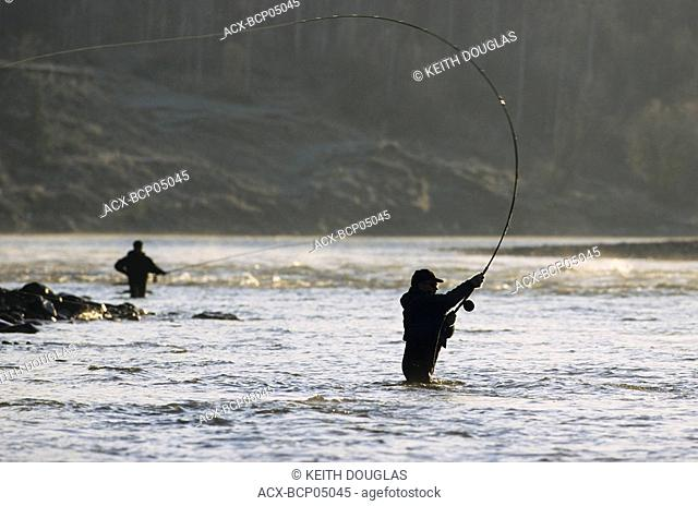 Speyfishing  2 handed rods for steelhead on Bulkley river by Smithers, British Columbia, Canada