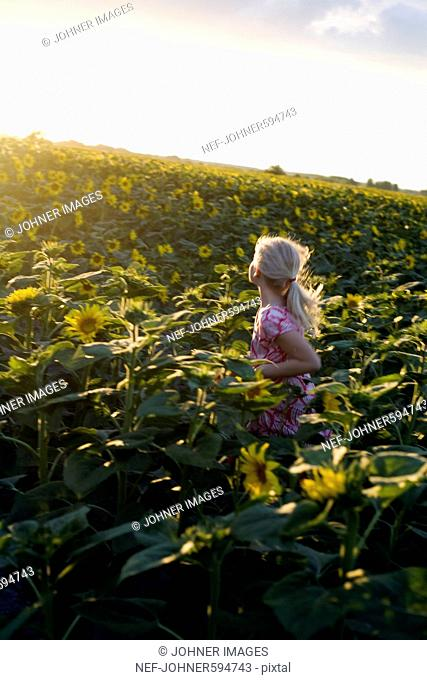 A girl running in a field of sunflowers, Hungary