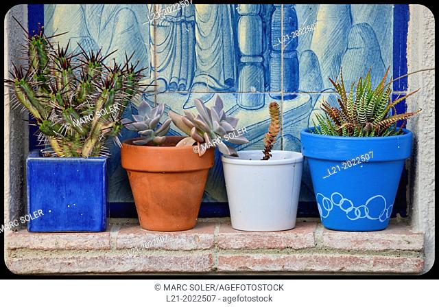 Four potted plants with plants inside. Daylight. Sabadell, Barcelona province Catalonia, Spain