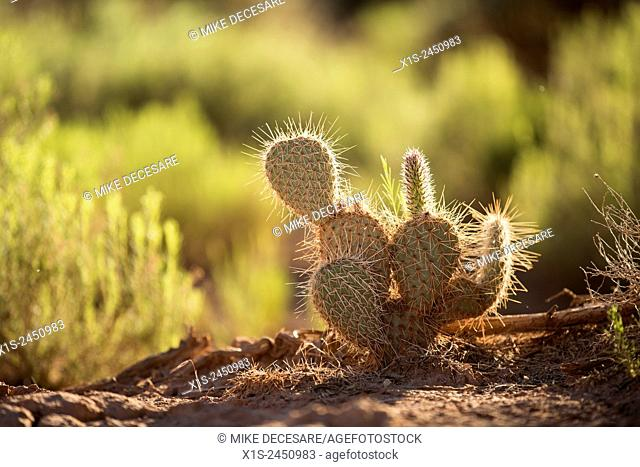 Desert cactus survives and thrives in a wilderness area