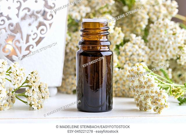 A bottle of essential oil with fresh blooming yarrow plant