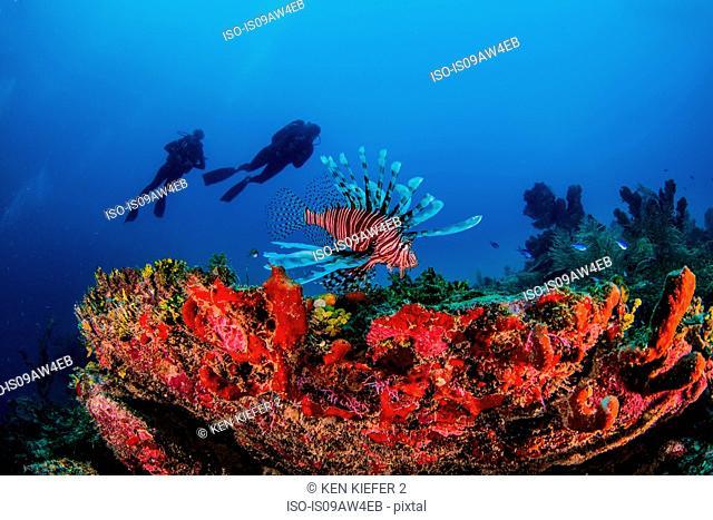 Invasive lionfish, Xcalac, Mexico