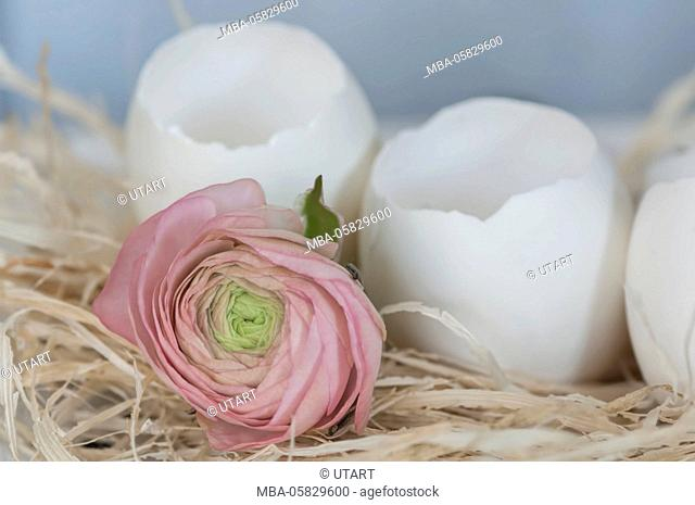 Medium close-up, still life, decoration, pink anemone on bed from phloem, eggshells, easter decoration, main colours white, cream and pink