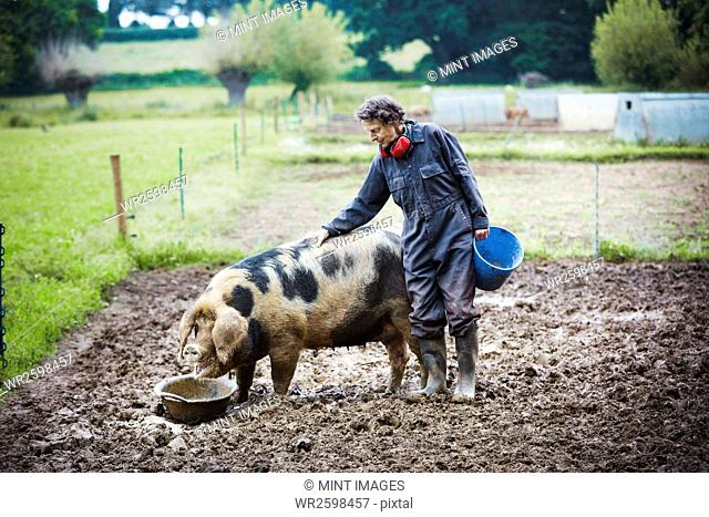 Woman stood next to a pig eating, holding a bucket
