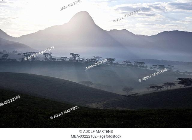 Africa, Mosambique, province of Zambezia, near Gurue, mountain, morning