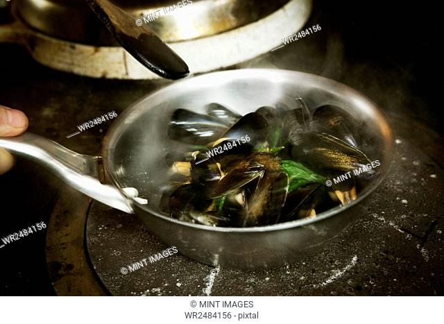 High angle view of a frying pan with steamed Black Mussels on a stove