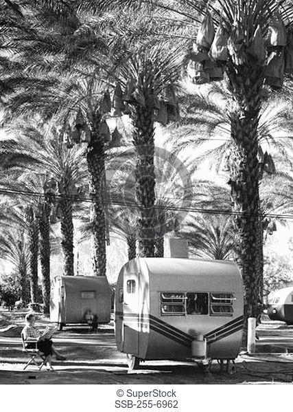 Motor homes near palm trees