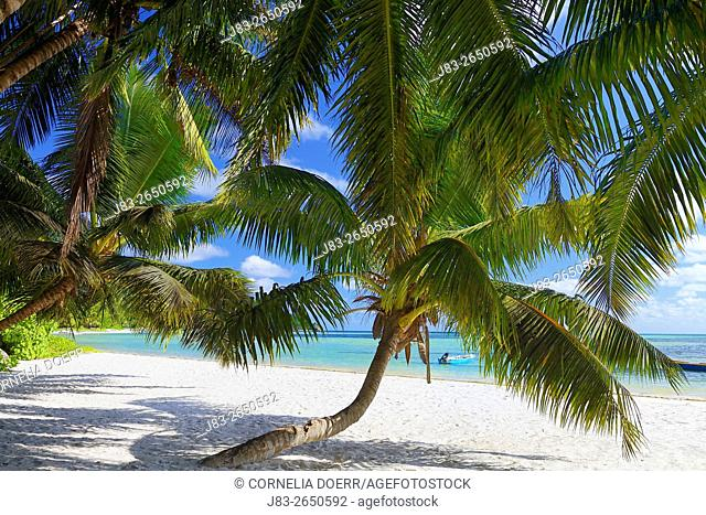 Tropical Palm Beach, Praslin Island, Seychelles, Indian Ocean, Africa