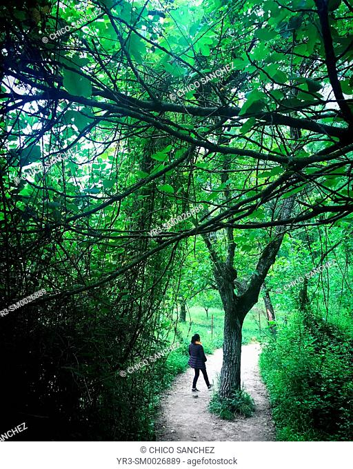 A woman walks in a path in the forest in El Bosque, in the Sierra of Grazalema, Andalucia, Spain