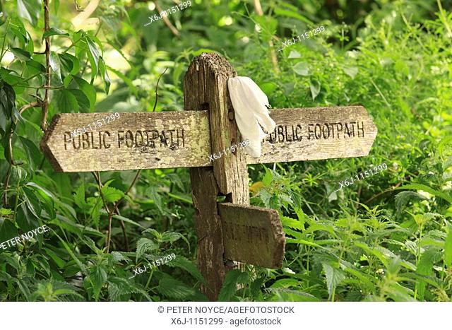 old wooden public footpath three way sign in overgrown hedgewith white hankerchief attached as marker
