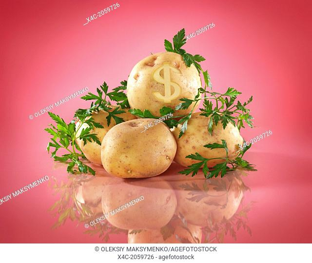 Conceptual food still life of potatoes with dollar symbol. Food prices concept isolated on bright pink background