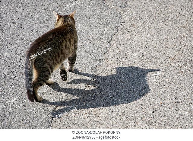 Streunende Katze wirft langen Schatten auf die Strasse. A stray cat casting a long shadow on the street