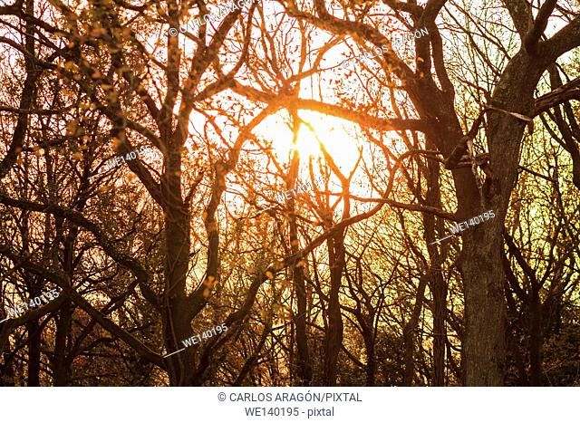 The bright sun shining through the leaves of the trees in a forest. Castro Urdiales, Spain