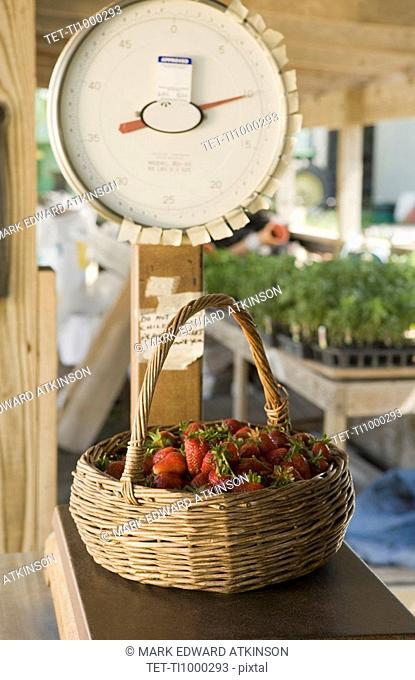 Basket of fresh strawberries on scale