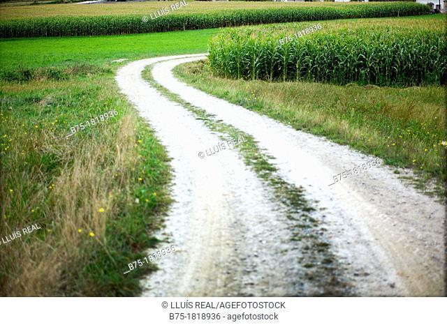 Country road, Camino de Santiago, North Road, Spain