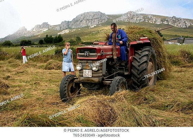 Silage harvesting, Villarin de Cubilledo. A Lastra. O Cadavo. Lugo province, Galicia, Spain