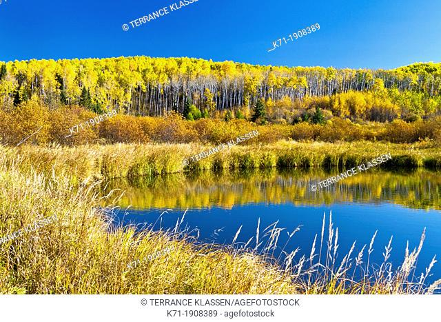 Marshland and fall foliage color in Prince Albert National Park, Saskatchewan, Canada