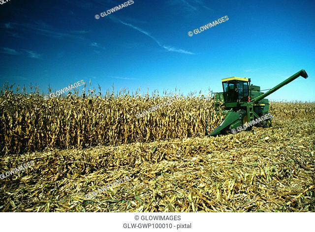 Four row combine goes thru corn field, Henry farm, Clinton County, OH