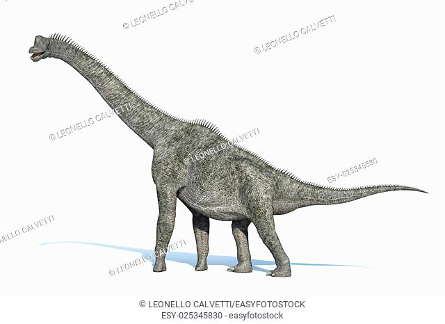 Photorealistic 3 D rendering of a Brachiosaurus. On white background with drop shadow and clipping path included