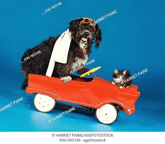 Dog and cat in toy car