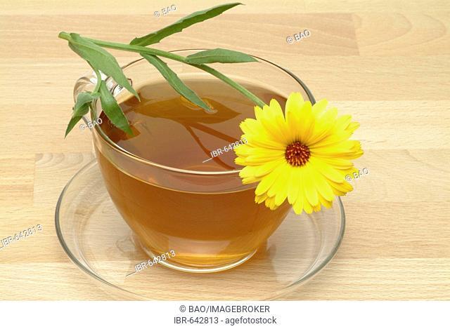 Pot Marigold or English Marigold (Calendula officinalis), herbal tea, medicinal tea
