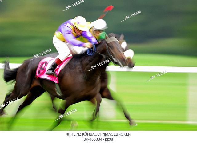 Jockeys at a gallop race, hosre race, racehorses in motion, detail