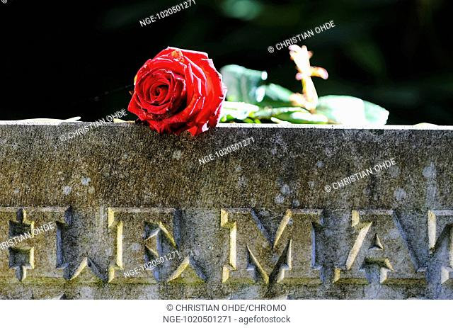 Red rose on a gravestone
