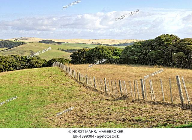 Sand dunes used for grazing, Te Paki Recreation Reserve Northland, Te Paki, North Island, New Zealand