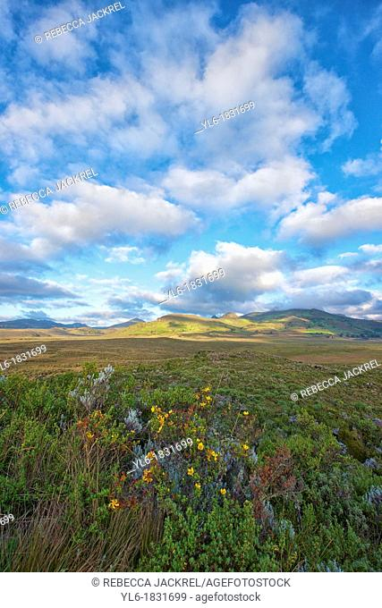 The northern portion of the Bale Mountains National Park is a grassland called Gaysay where Mountain Nyala, Bushbuck and Duiker roam