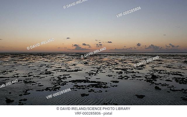 Timelapse footage of sunrise over rockpools on a tropical coast. Filmed in Queensland, Australia
