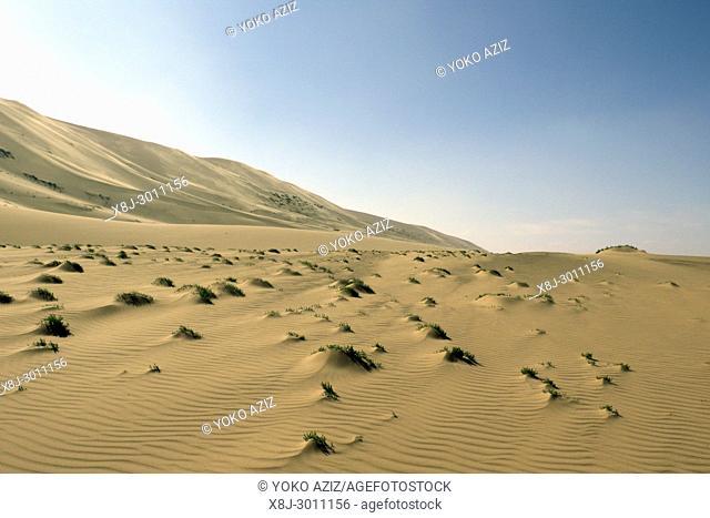 Dunes, Gobi desert, Mongolia