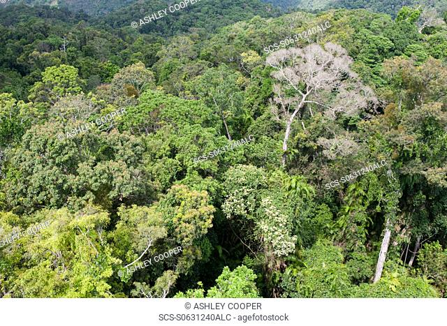 The forest canopy of the Daintree rainforest in northern Queensland Rainforest habitat is crucial wildlife habitat, carbon sink and the lungs of the planet