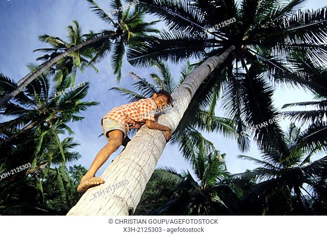 young boy climbing onto coconut tree, Flores island, Lesser Sunda Islands, Republic of Indonesia, Southeast Asia and Oceania