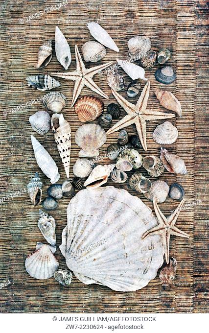 Sea shell collection, textured image