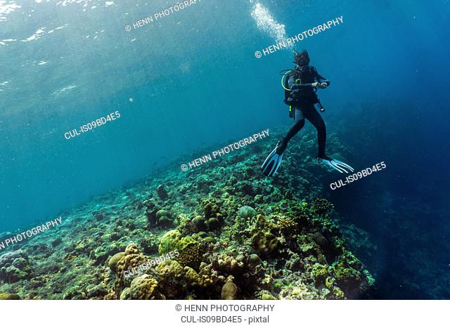 Underwater view of diver exploring coral reef at the Tubbataha Reefs Natural Park, Cagayancillo, Palawan, Philippines